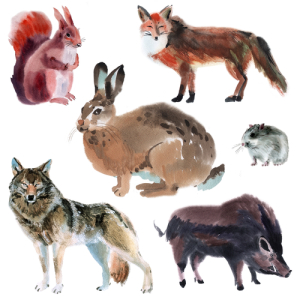 Set of forest animals. Watercolor illustration in white background