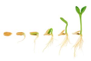 pumpkin-seed-growing